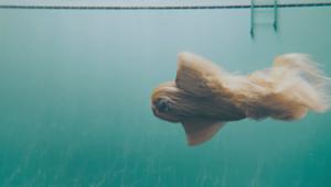 Klarna - Swim