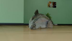 Klarna - Fish