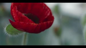 Royal British Legion - Flanders Fields