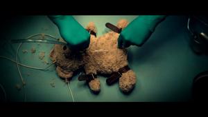 PETA - Animal Testing