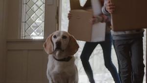 """Unison - """"Home Moments - Dog Door"""""""