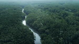 Bengali Jungle in Vietnam