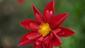 Pollen Couture