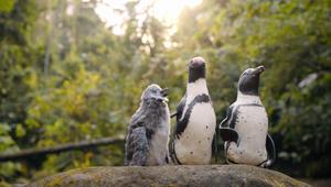 CIBC | Penguins