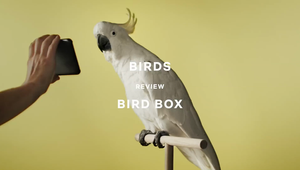 303 MullenLowe Entry - Birds review Bird Box
