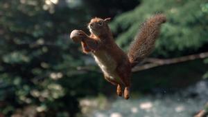 Vittel - Biodiversité (Squirrel)