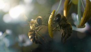 Vittel - Biodiversité (Bee)