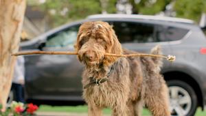 Toyota RAV 4 'Over The Dog'