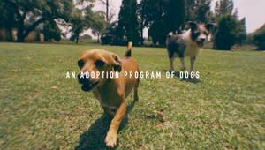 Pony Malta - AdoptABreak