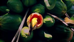 Green & Blacks Wildly. Deliciously. Organic.