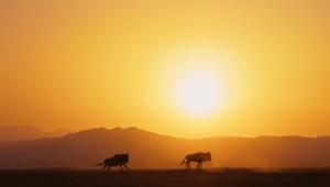 BBC | A Perfect Planet